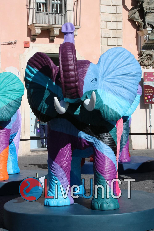 elefante-piazza università-1