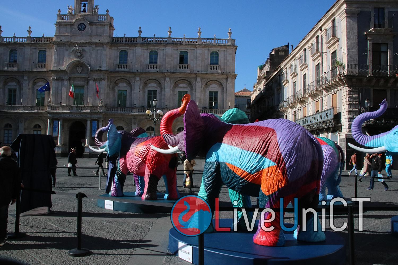 elefante-piazza università-2
