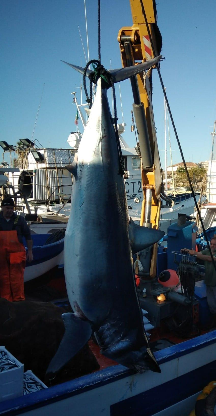 squalo-catania-2